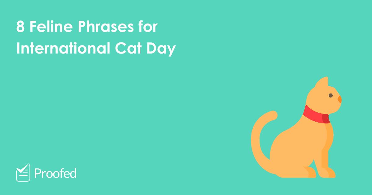 8 Feline Phrases for International Cat Day